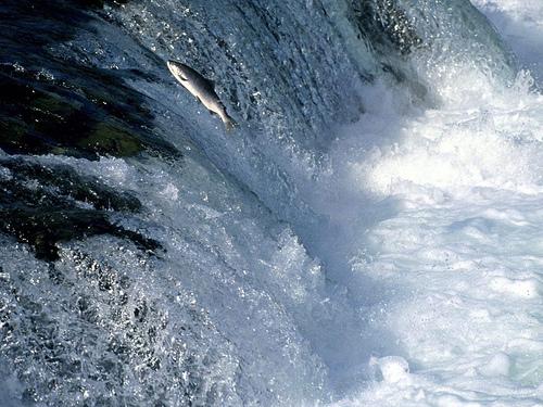 Contra la corriente el rinc n de el poeta for Nadar contra la corriente